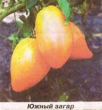 Томати помаранчеві, корисні і смакові якості, сорту помаранчевих томатів