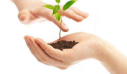 Вуглекислий газ, глюкоза і вуглецева життя в основі життя життя рослинного світу