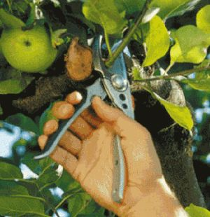 Догляд за молодими деревами