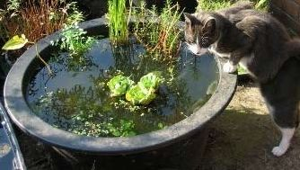 Догляд за водоймою: як позбутися від мулу і водоростей