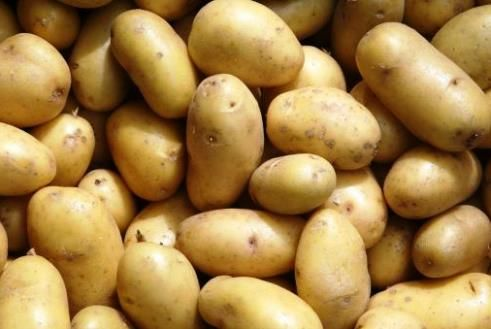 Прискорене розмноження картоплі паростками розсадним способом