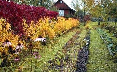 обробка землі восени