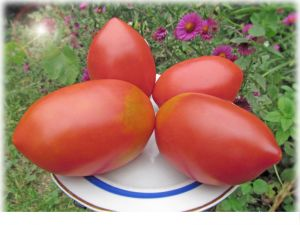 характеристика плоду