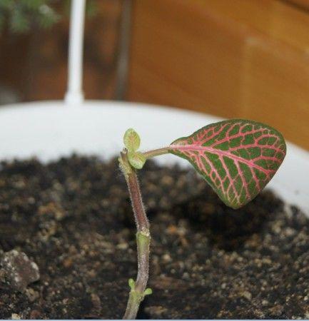 Правильна обрізка запорука красивої форми рослини