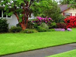 Види декоративних газонів
