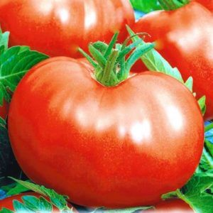 Смачний томат «фунтик f1»: характеристика і фото з описом сорту