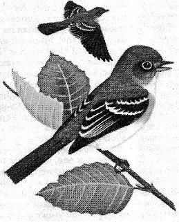 Воробей - корисний птах в саду