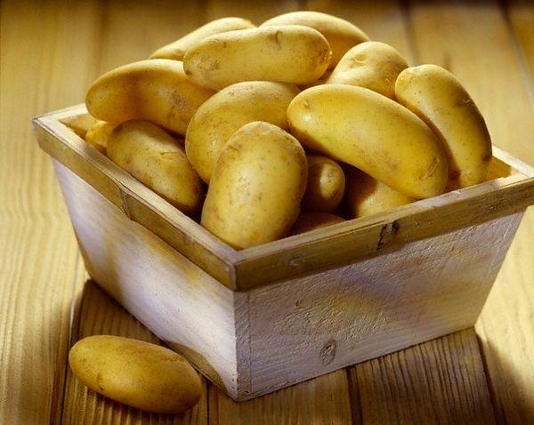 Картопля сорту Зорачка: фото і опис