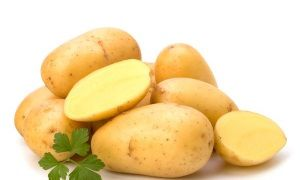 Характеристика втечі картоплі сорту Зорачка