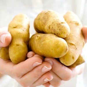Полив і добриво картоплі сорту Зорачка