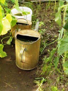 Повітря і вода в грунті - необхідна умова забезпечення життя рослин