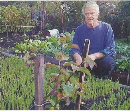 Повітряна відводка як один із способів вегетативного розмноження яблуні