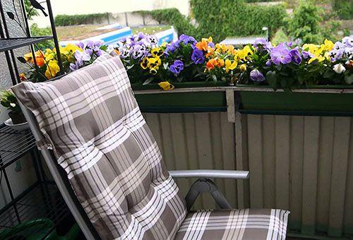 Вибір квітів і правильний догляд при вирощуванні на балконі
