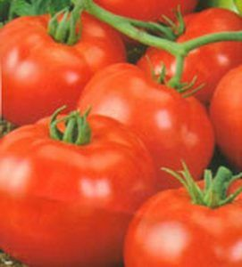 Виростити просто, є смачно - помідори схід f1: характеристика і опис сорту