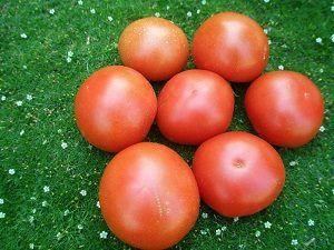 Висота томата «м`ясистий цукристий» робить його велетнем серед побратимів. Опис високоурожайного сорти помідора