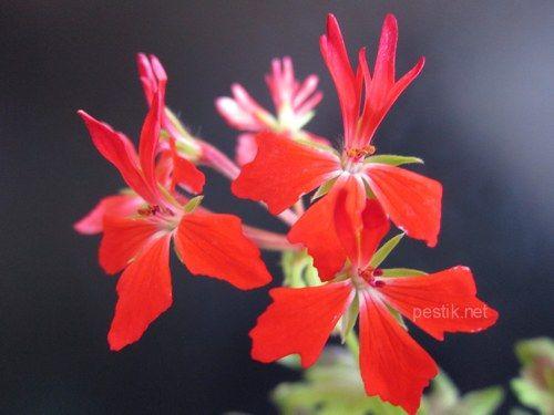Нотатки квітникаря