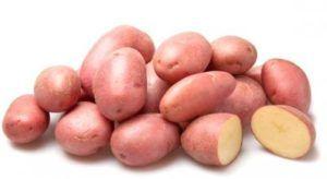 Жаростійкий картопля «кримська троянда»: опис сорту, характеристика, фото