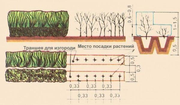 1281526841_3zgorod